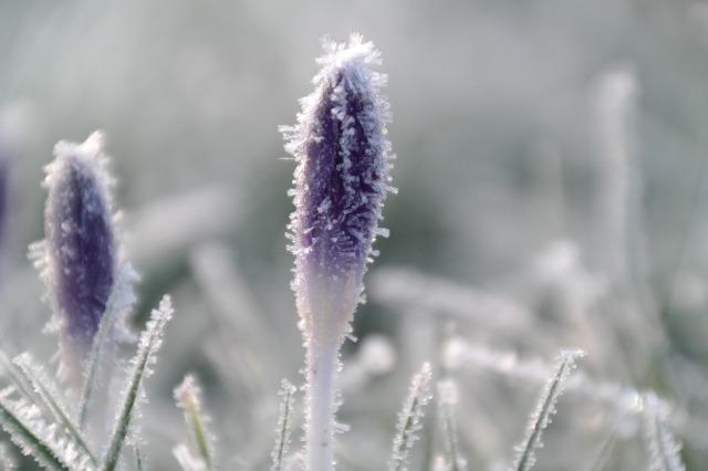 winter-4611937_1920